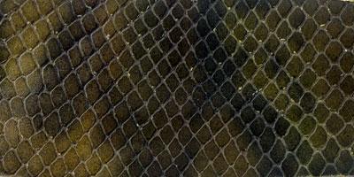 snake maro verde